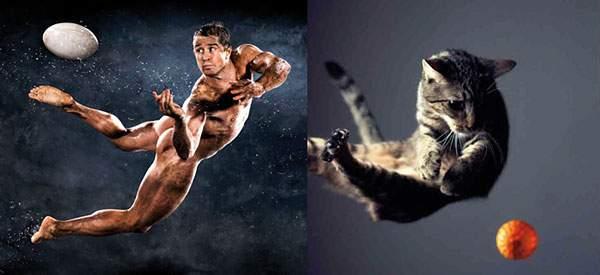 ボールをキャッチする瞬間の躍動感溢れるイケメン猫