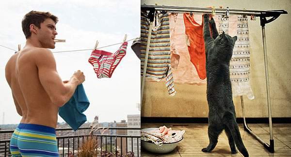 洗濯物を干すイケメン猫