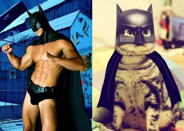 バットマンコスプレなイケメン猫