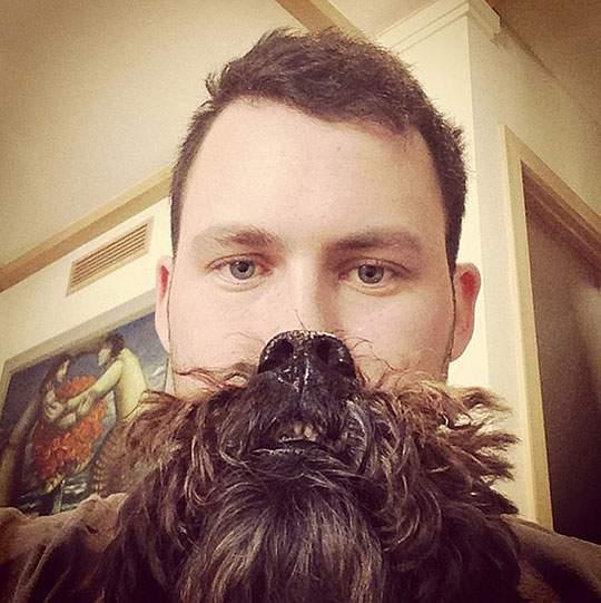 Dog Beards - 02