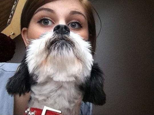 Dog Beards - 03