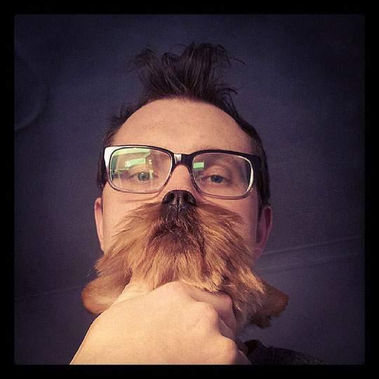 Dog Beards - 07