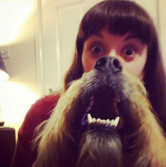 Dog Beards - 10