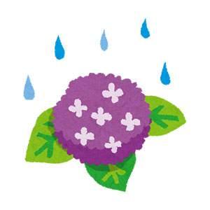 梅雨のイラスト「紫陽花と雨」