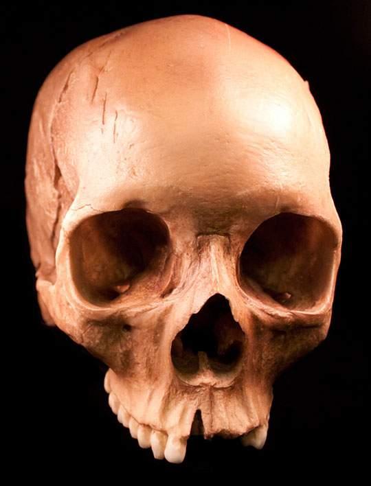 本物の頭蓋骨を撮影したフリー写真素材セット - 01