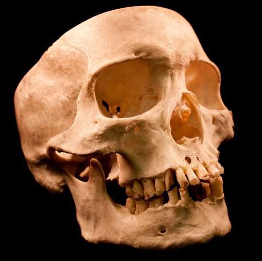 本物の頭蓋骨を撮影したフリー写真素材セット - 03