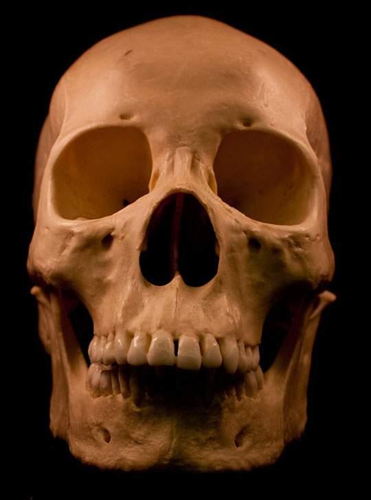 本物の頭蓋骨を撮影したフリー写真素材セット - 04