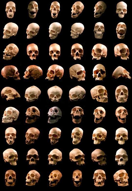 本物の頭蓋骨を撮影したフリー写真素材セット - 05