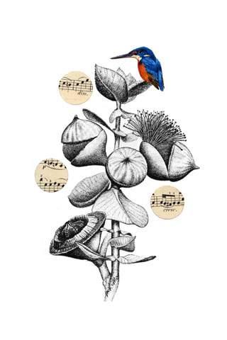 Birdsongs 3