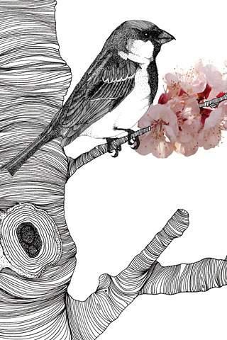 Sparrow Blossom