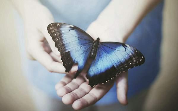 手のひらに止まった青い蝶々の壁紙
