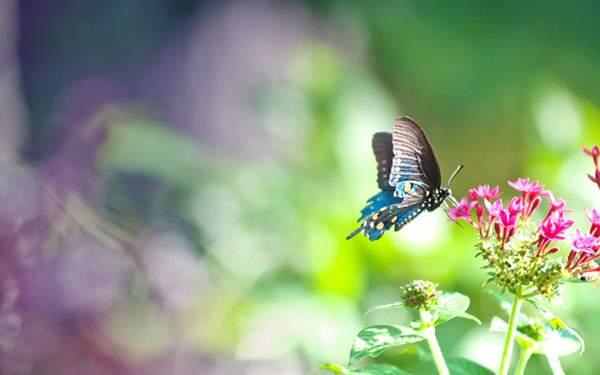 背景のボケが綺麗な蝶々の写真