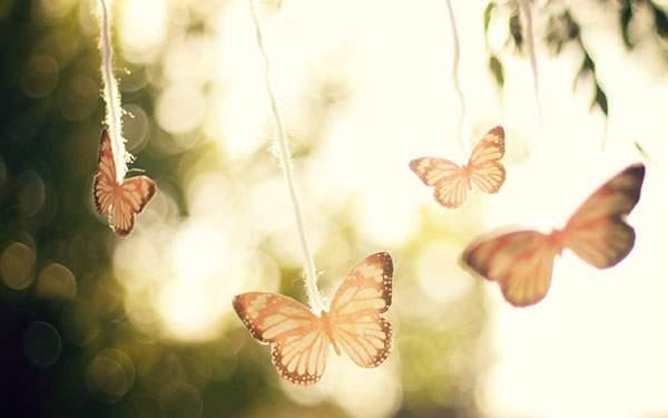 蝶々の飾りを撮影した写真の壁紙