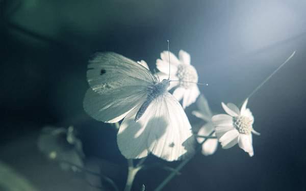 差し込む光がきれいなチョウチョウの壁紙画像