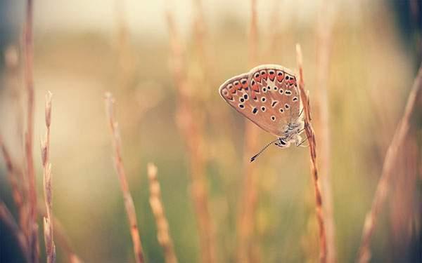 蝶々を撮影したオレンジ色の壁紙
