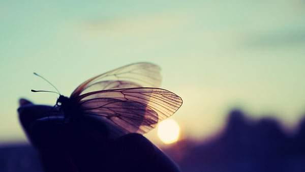 逆光を受けた蝶々のシルエット