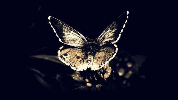 ドクロ模様の羽の蝶々の壁紙