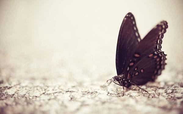 綺麗な黒い蝶々の壁紙画像