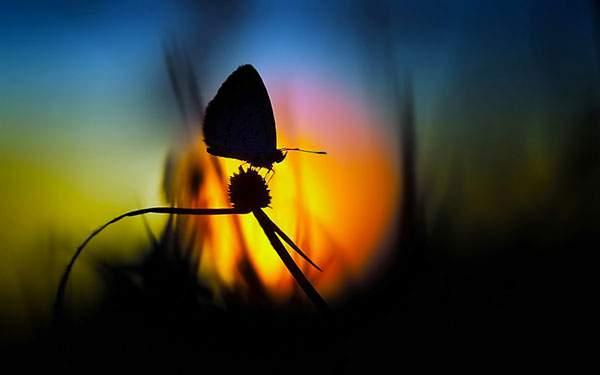 夕日と蝶々のシルエット