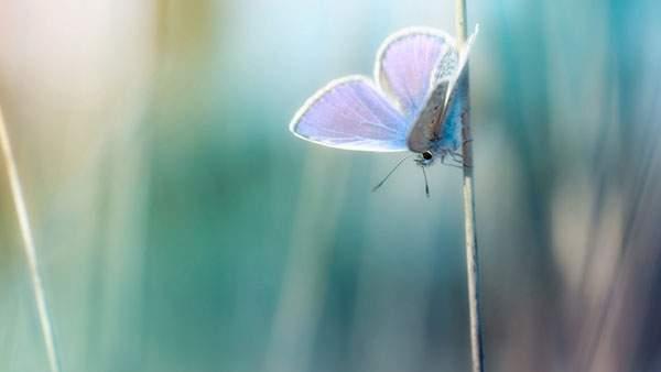 綺麗な青の蝶々の写真画像