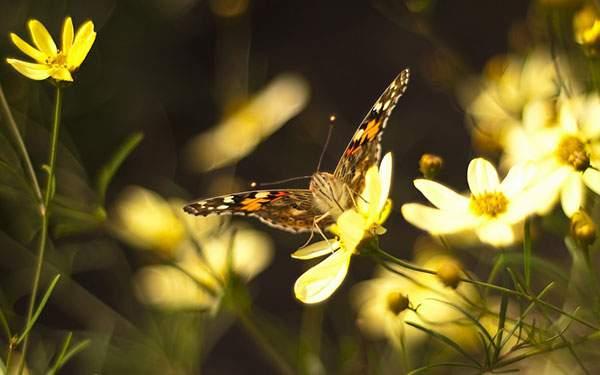 花の上に止まった蝶々の黄色い写真