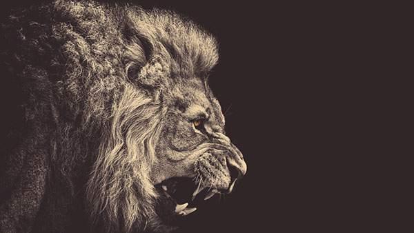 威嚇するライオンの壁紙画像