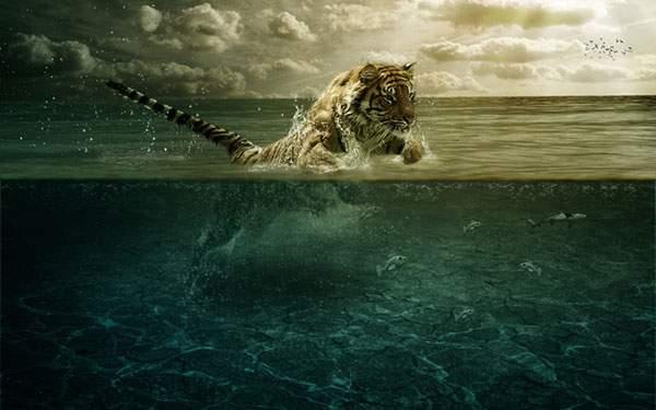 水しぶきを上げて泳ぐ虎