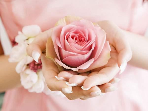 手のひらの上のピンクの薔薇の花