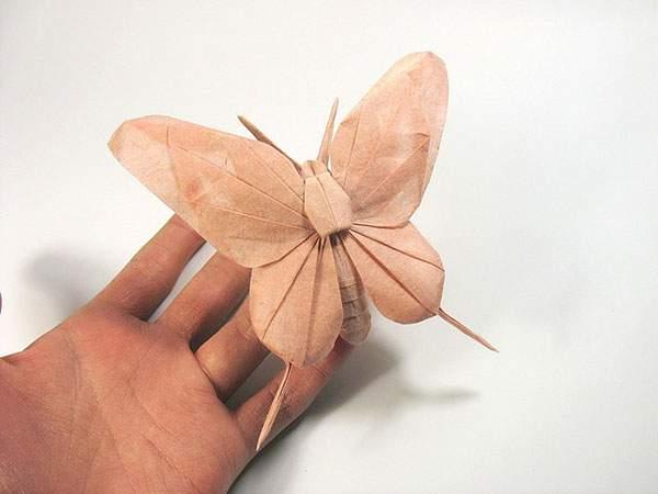 手のひらサイズのチョウ