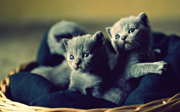 カゴの中の二匹の猫の赤ちゃんの写真