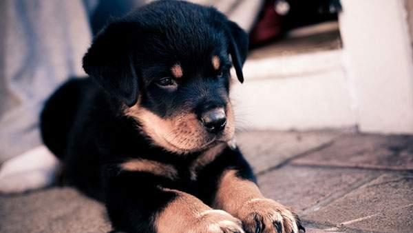 お行儀よく座る犬の赤ちゃんのかわいい壁紙画像