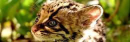 無料壁紙:動物の赤ちゃんのかわいい写真画像まとめ(猫・犬・虎・猿)