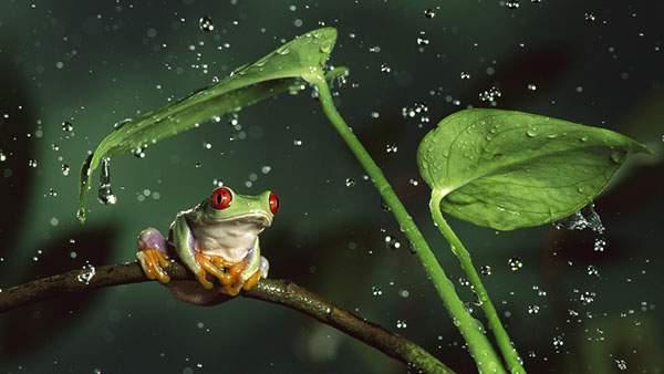 カエルと空中の雨粒を鮮明に捉えた写真