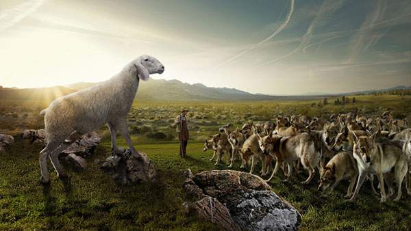巨大な羊にビビる狼達