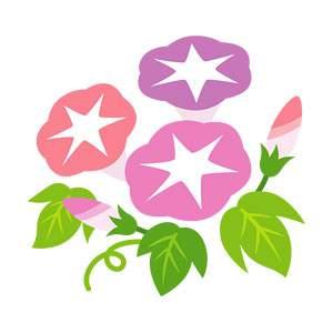 アサガオのイラスト素材(ピンク・赤紫)