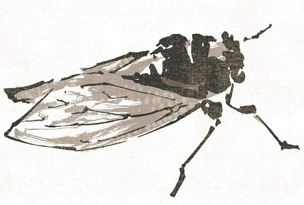 Summer No.55 Brown Cicada