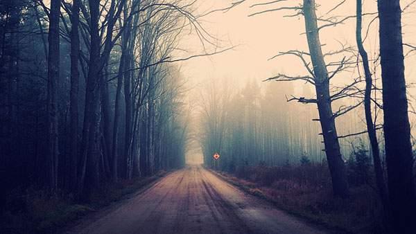 まっすぐ続いていく林の中の道の高画質壁紙画像