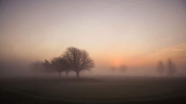 ぼんやりと霧の中に消えていく木々の景色の写真壁紙画像