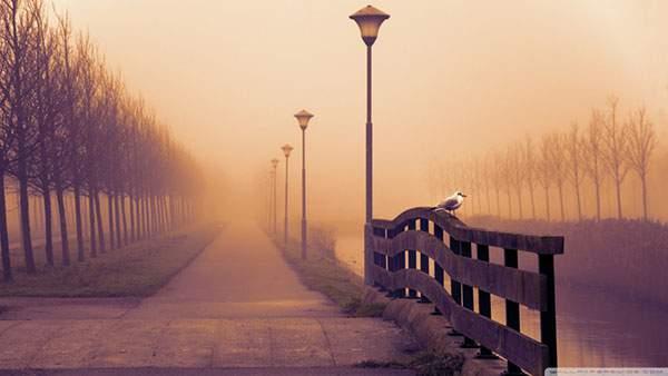 川のほとりの道と一羽の鳥の綺麗な壁紙