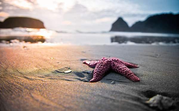 砂浜のヒトデを撮影した綺麗な写真画像