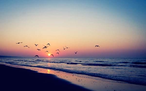 夕日のビーチを飛び交うカモメの群れの写真壁紙