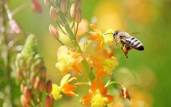 ALミツを集めるハチの綺麗な壁紙画像