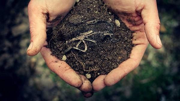 手の中の土に埋まった小さな恐竜の化石