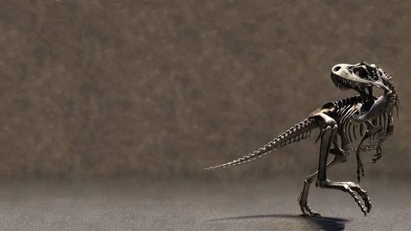 今にも走り出しそうなティラノサウルスの全身の化石