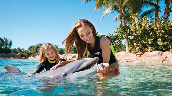 南の島でイルカと遊ぶ女性と女の子の写真