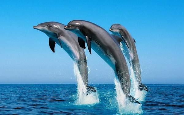 勢いよく海から飛び出す3匹のイルカを撮影した綺麗な写真