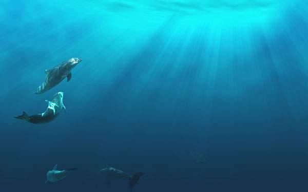 海中に差し込む光とイルカ達の幻想的な写真
