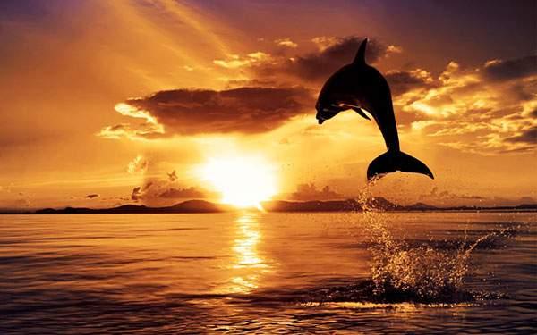 真っ赤な夕日とジャンプするイルカのキレイなシルエット