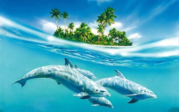 南の島とイルカたちの爽やかな壁紙