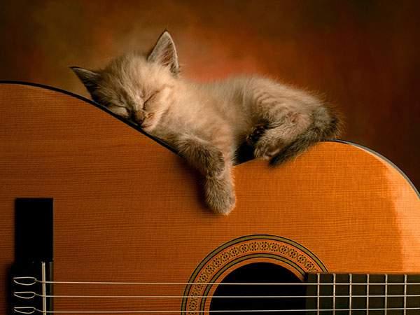 アコースティックギターの上ですやすや眠る子猫のかわいい壁紙画像
